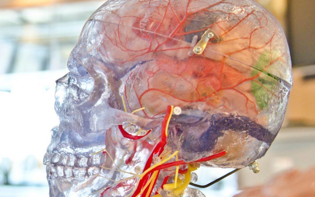 Anti-Aging fürs Gehirn-Teil A