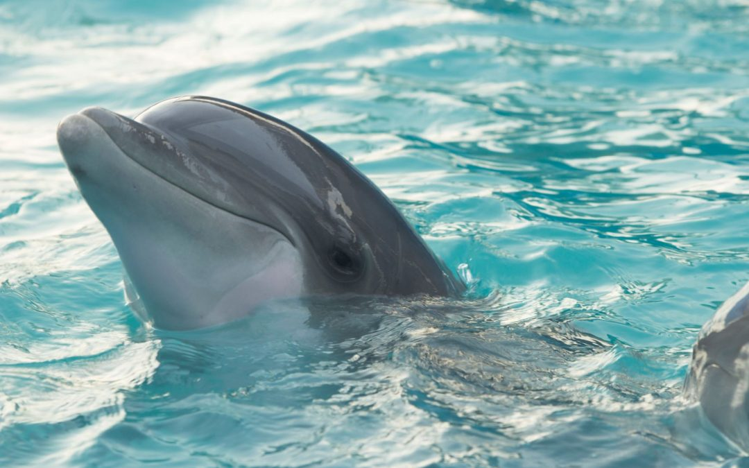 Die Delfine hat noch keiner gefragt!